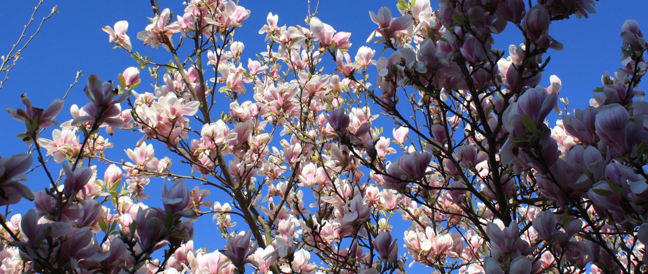 B&B Magnolia op steenworp afstand van Hertogenbosch