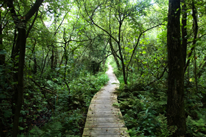 Natuurgebied de Moerputten als uitstapje vanuit B&B Magnolia Vlijmen